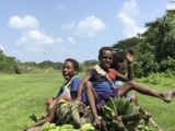 Local kids help with banana harvest